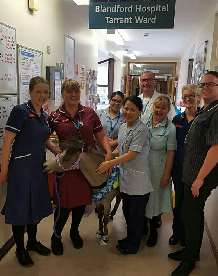 Four-legged Lofty spreads a little happiness at Blandford Hospital